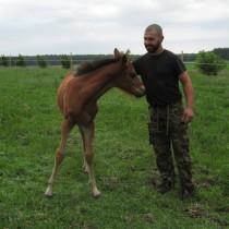 Hubert - stare motocykle, konie